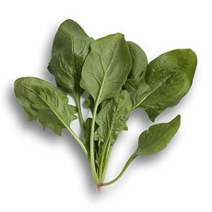 Boa RZ - Spinach