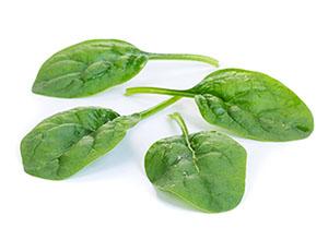 Sunangel RZ - Spinach